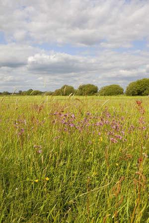 un paisaje con robin ragged de flores silvestres y otras hierbas floraci�n en una pradera de agua tradicional en ingl�s puede Foto de archivo - 9574050
