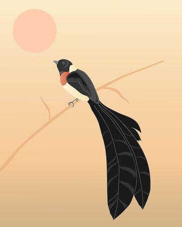 an illustration of an eastern paradise whydah on a reed under an african sun Stock Vector - 9700585