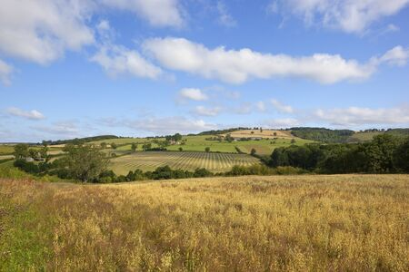 english countryside: a summer landscape with a field of oats and views across a beautiful valley to the patchwork fields of the yorkshire wolds under a blue cloudy sky
