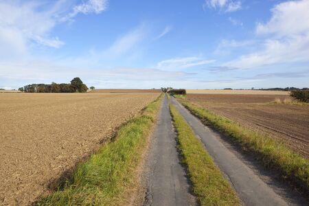 a small rural road running through cultivated fields in autumn under a blue sky Stock Photo - 10595137