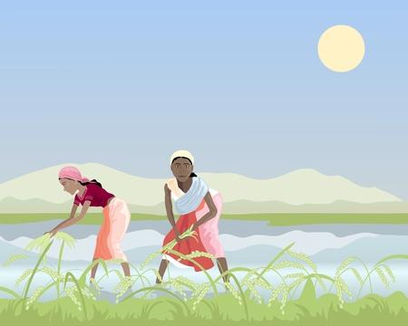 una ilustración de dos trabajadores de mujeres asiáticas cosecha de arroz en los arrozales bajo un cielo azul