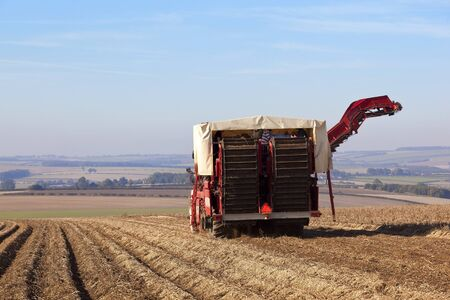 labouring: a red potato harvester moving along a furrowed potato field on the yorkshire wolds in autumn under a blue sky