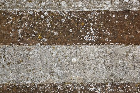 background and texture of lichens and algae growing on two tone antique masonry Stock Photo - 10893785