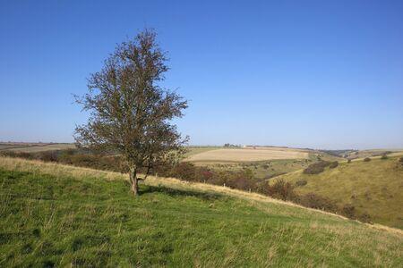 a hawthorn tree on a grassy hillside under a clear blue autumn sky Stock Photo - 10893784