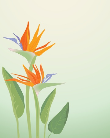 an illustration of strelitzia regina bird of paradise flowers with foliage on a pale green background