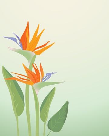 flores exoticas: una ilustración de Strelitzia Regina ave de paraíso de flores con hojas sobre un fondo verde pálido Vectores