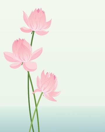 an illustration of three pink lotus blooms on a pale watery background Vector