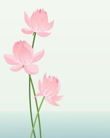 watery: l'illustrazione di tre rosa, fiori di loto su fondo chiaro acquoso