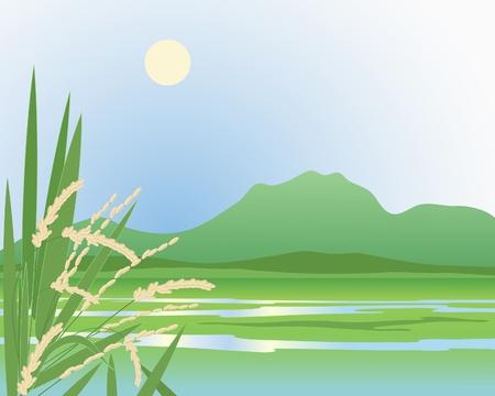 arrozal: una ilustraci�n de un hermoso campo verde ex�tico arroz con las monta�as y las plantas maduras de arroz en el primer plano, bajo un sol de color amarillo