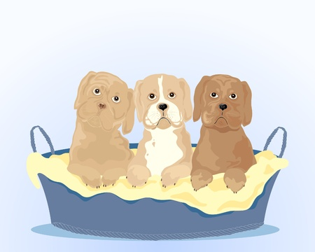 an illustration of three attractive young puppies in a dog basket on a light blue background Stock Vector - 11307756