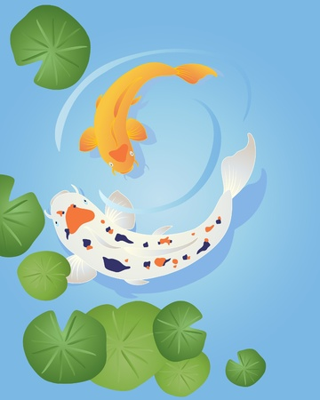an illustration of two beautiful koi carp swimming in clear waterwith green lily leaves Ilustrace