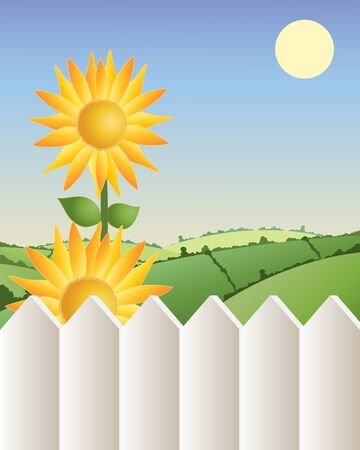 hedgerows: an illustration of two bright sunflowers infront of green rolling hills with a white fence under a summer sun