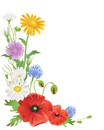 an illustration of an arrangement of annual wildflowers with corn marigold poppies corncockle cornflowers and daisies on white