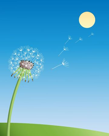an illustration of a dandelion flower seedhead under a clear blue summer sky Stock Vector - 11674868