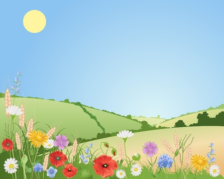 an illustration of summer wildflowers in a beautiful landscape with poppies daisies cornflowers harebells corncockles and wheat under a blue sky Vector