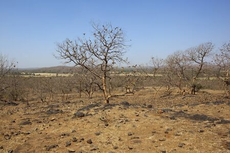 gir: a dry arid indian landscape with trees and hills in sasan gir national park gujarat india