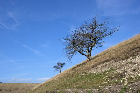 hillsides: late winter landscape with hawthorn trees growing on dry chalky hillsides under a blue sky Stock Photo
