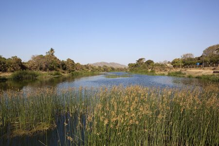 rushes: a beautiful aquatic landscape with rushes trees blue sky and hills in the background in gujarat india