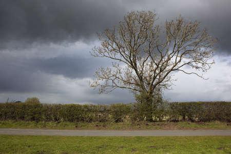 grass verge: un cielo tempestoso sopra un paesaggio rurale con un frassino scoppiando in una nuova crescita di sopra di una siepe e strada rurale e ciglio erboso