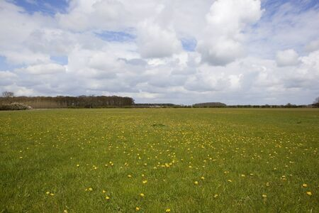 blustery: blustery clouds over a springtime landscape with a meadow full of dandelion flowers and distant trees and hedgerows