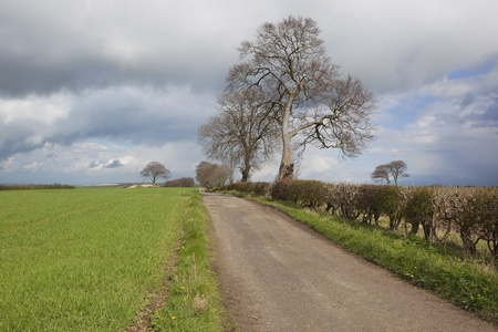 english rural landscape with a farm track trees and hedgerows and young barley crop under a cloudy springtime sky photo