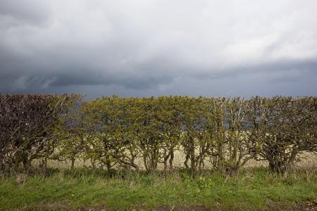 grass verge: nuvole di tempesta su un ciglio erboso e siepi miste in primavera