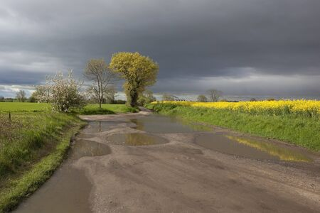 a rural landscape with a flooded farm track through fields of cereals and canola flowers under stormy skies in springtime photo