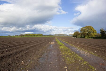 furrows: an agricultural landscape with potato rows under dramatic springtime cloudy skies Stock Photo