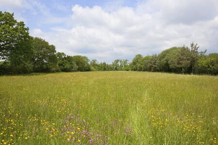 ragged robin: english landscape with a traditional hay field full of wild flowers and grasses surrounded by trees under a cloudy summer sky