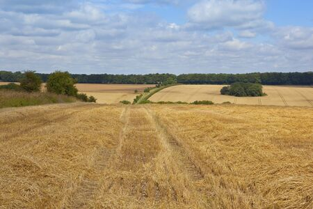 cloudy summer skies over an agricultural landscape in the yorkshire wolds england with rolling hills and distant woodlands at harvest time Stock Photo - 14960923