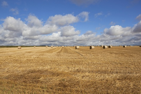 agricultural landscape of the yorkshire wolds with large round bales sitting in a golden stubble field at harvest time in late summer under a blue cloudy sky photo