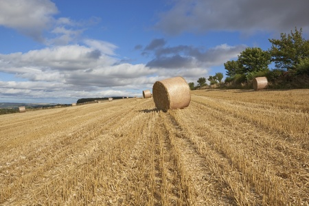 an agricultural landscape at harvest time on the scenic yorshire wolds england with large round straw bales waiting to be collected under a cloudy blue sky in late summer