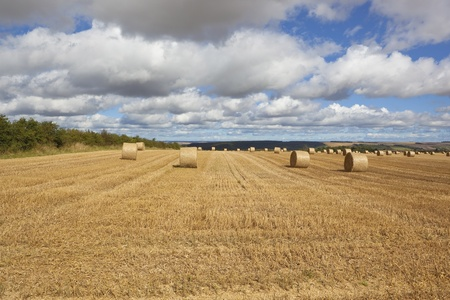 a scenic agricultural landscape with large round straw bales in a golden stubble field with rolling hills under a blue cloudy sky in late summer photo