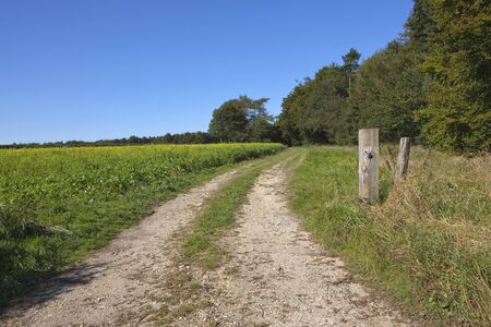 chalky: an agricultural landscape with a chalky farm track running Stock Photo