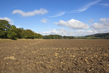 a newly plowed field surrounded by trees in an autumn landscape under a clear blue sky with white cloud Reklamní fotografie