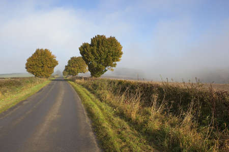 an autumn landscape with early morning mist rising over trees and hedgerows by a rural highway photo