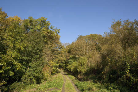 an english bridleway in autumn going up a hill with colorful trees under a clear blue sky in october photo