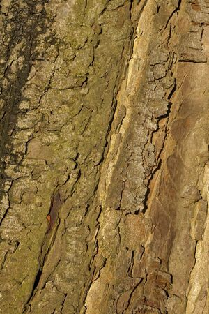 natural background patterns and textures of horse chestnut tree bark Stock Photo - 17229853
