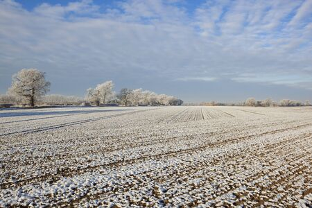 frost covered trees and arable fields in a rural winter landscape under a cloudy sky photo