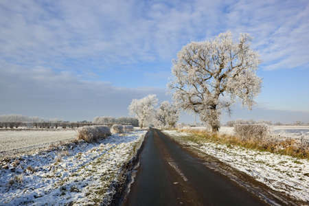 english oak: a snowy country road with trees and hedgerows in an agricultural landscape under a blue cloudy sky