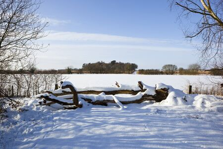 covered fields: snow covered fields and fallen trees in a winter landscape under a blue sky Stock Photo