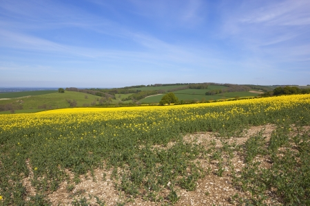 stunning yorkshire wolds agricultural scenery  photo