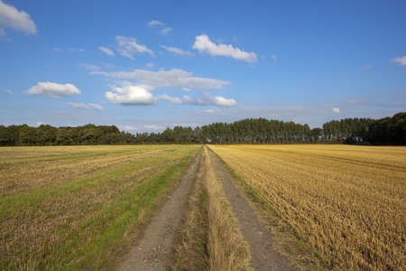 late summer: a dusty farm track running towards a row of poplar trees near newly harvested fields under a blue sky in late summer Stock Photo