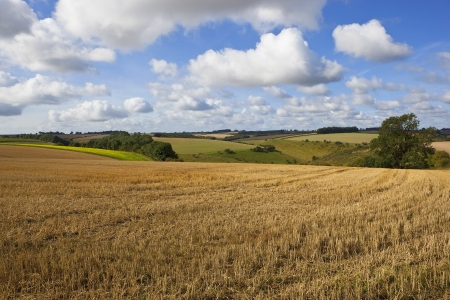 a yorkshire wolds landscape with rolling hills and hedgerows under a blue cloudy sky in late summer