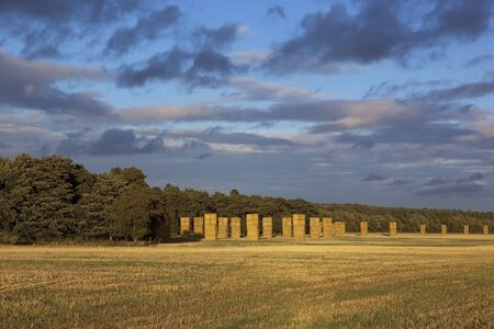 tall straw bale stacks in a golden stubble field beside woodland under a colorful evening sky photo