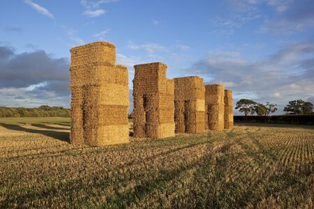 a stubble field landscape with tall stacked straw bales and trees bathed in evening light photo