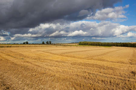 a newly cut wheat field in the yorkshire wolds england under a blue stormy dramatic sky in late summer
