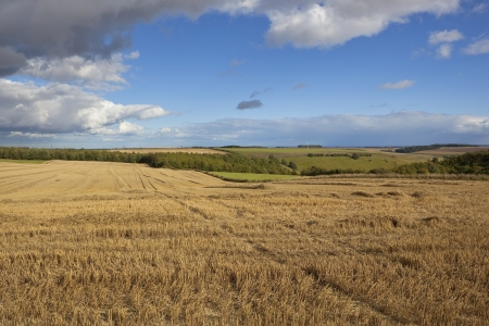 late summer: a sunny harvest scene in the picturesque yorkshire dales with a stormy dramatic sky in late summer