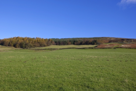 uplands: grassy meadows and colorful autumn trees in the upland landscape of the north york moors yorkshire