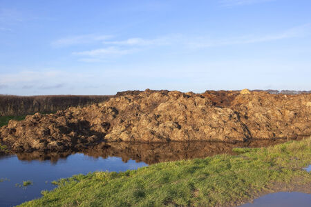 hedgerow: english winter landscape with a pile of manure by a hedgerow with grass and blue sky reflected in puddles